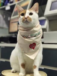 Resident cat at vet clinic