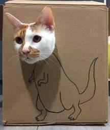 Cat inside decorated cardboard box