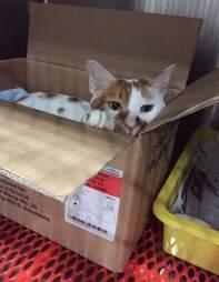 Rescued cat in cardboard box