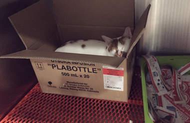 Rescue cat in cardboard box