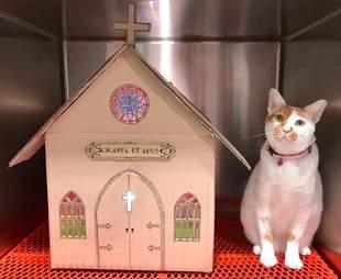 Cat sitting beside cardboard church