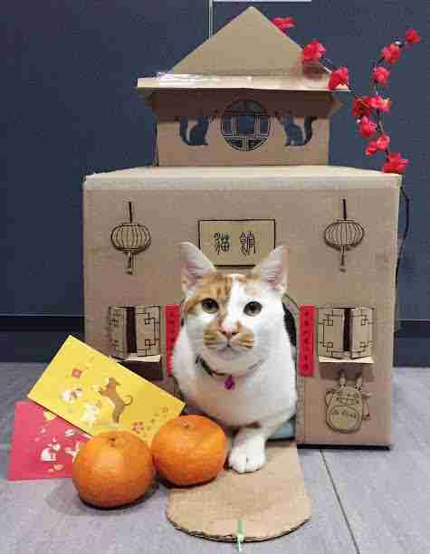 Cat with cardboard Chinese temple