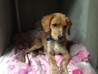 Rescued street dog in kennel
