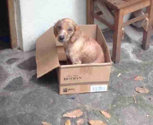 Rescued street dog in cardboard box