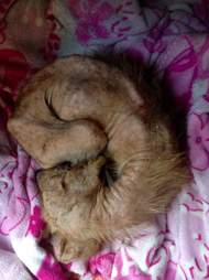 Street dog curled up in bed