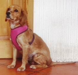 Rescue dog with pink harness
