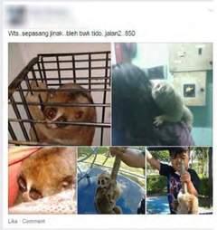wildlife trafficking social media