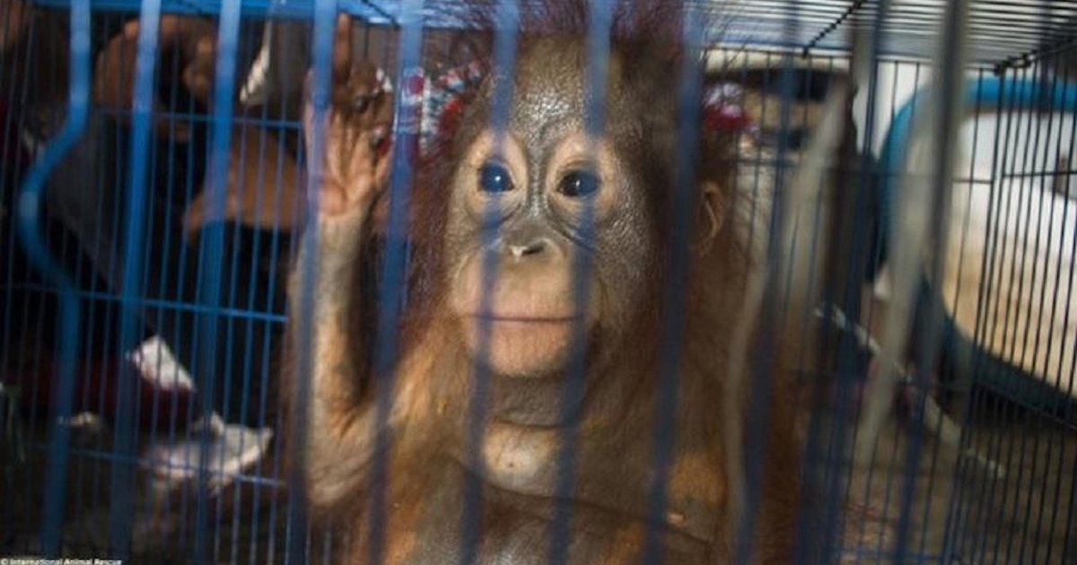 People Are Selling Thousands Of Wild Animals On Social Media