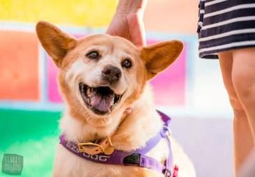 dog smiling while being pet