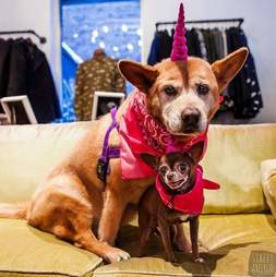 large dog with smaller dog in pink bandanas