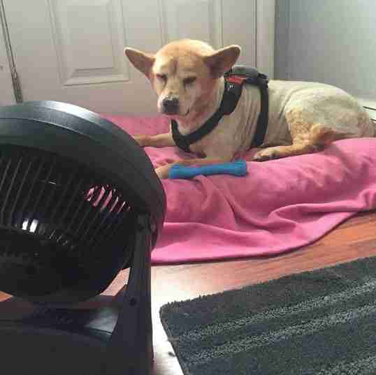 dog laying in front of fan
