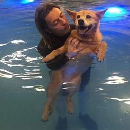 dog in pool with woman