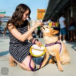 dog eating nathan's hot dog on sidewalk