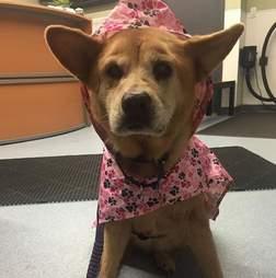 dog in rain coat
