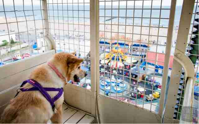 dog on ferris wheel
