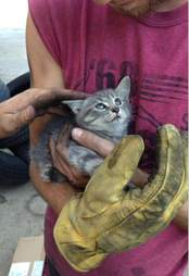 Kitten saved from car