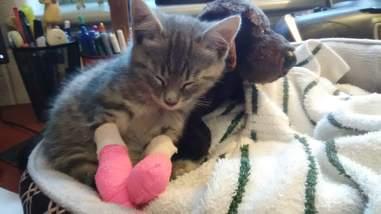 Rescued kitten sleeping with stuffed dog