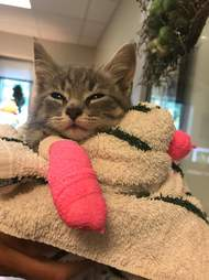 Rescued kitten with pink paw casts