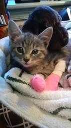 Rescued stray kitten