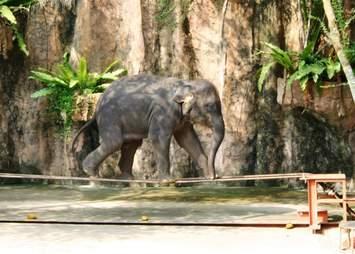 elephant tourism tricks