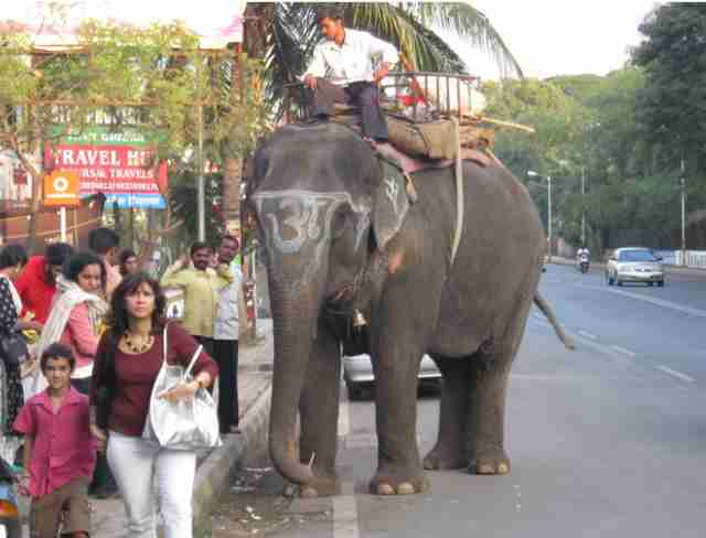 elephant ride industry