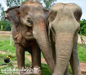 wassana elephant rescue