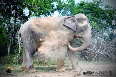 elephant rescue from industry