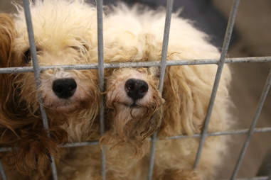 Rescue dogs sticking their noses through cage