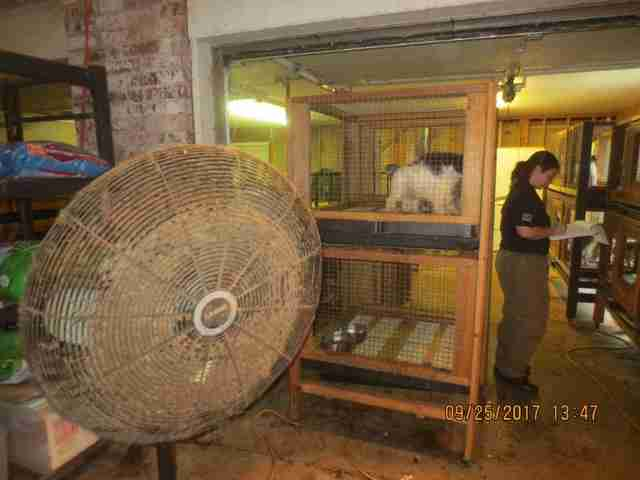 Caged dogs in puppy mill