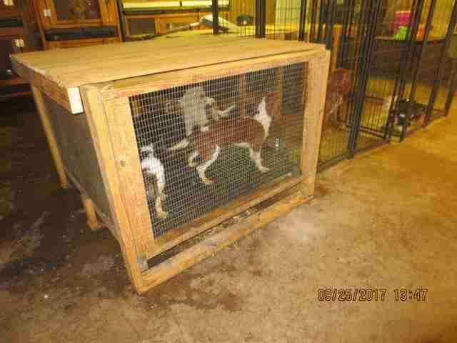 Caged dogs at puppy mill