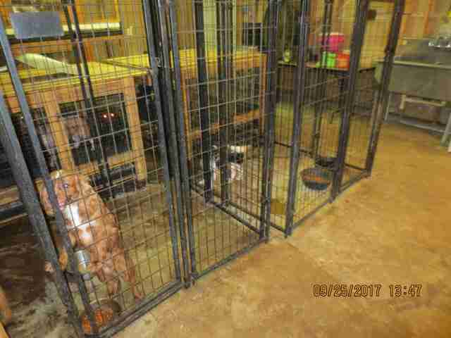 Dogs in cages at puppy mill