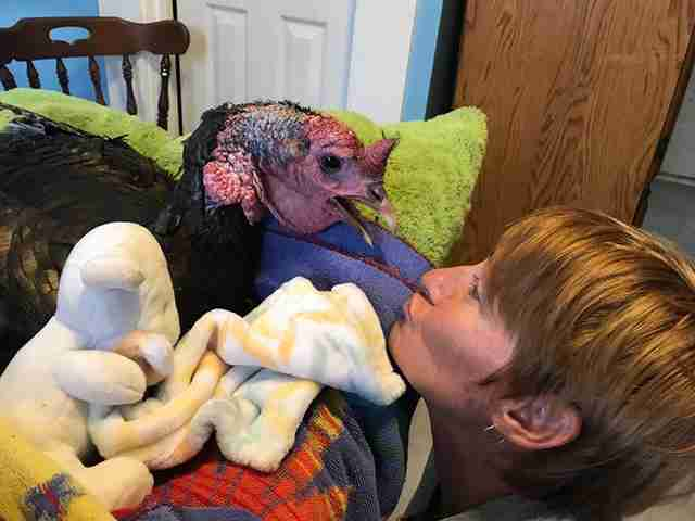 Woman with rescued turkey