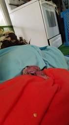 Sick turkey under blankets