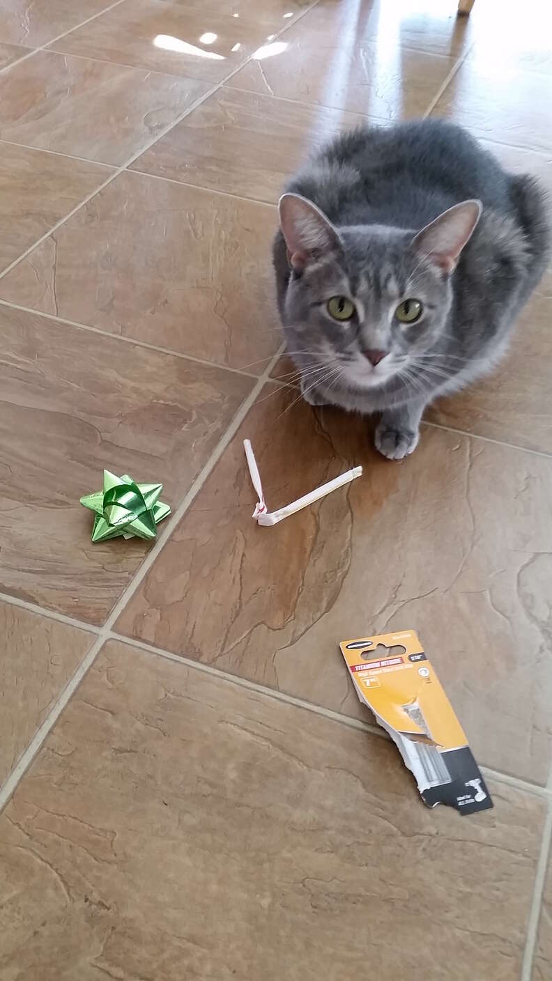 cat brings family gifts