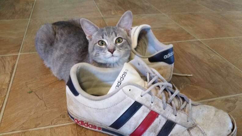 cat brings family gitfs