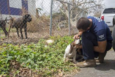 Man helping dog after hurricane