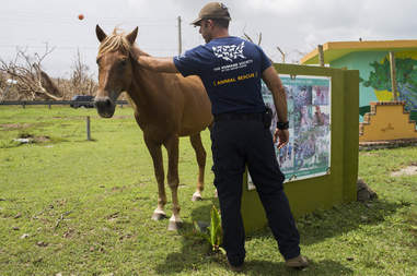 Man helping horse after hurricane