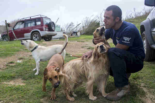 Man helping dogs on island after hurricane
