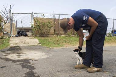 Man helping stray cat on island