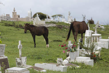 Horses grazing in cemetery