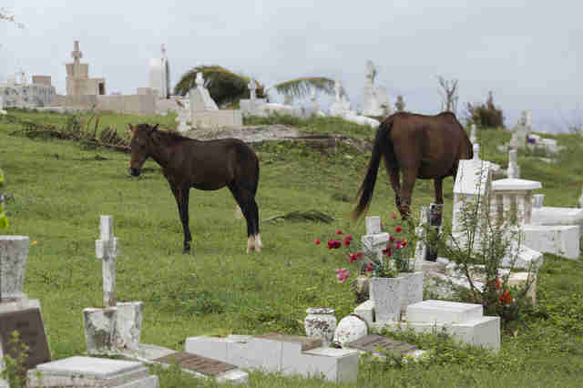 Horses grazing in cemetery