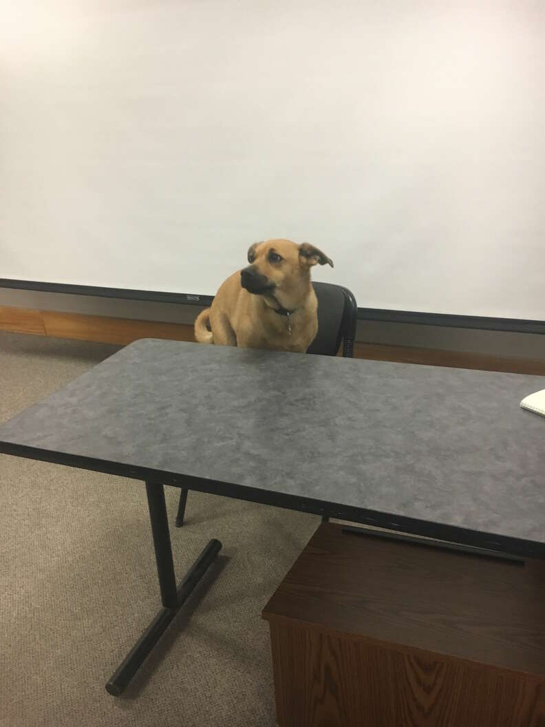 professor gives quiz about his dog