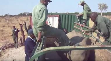 Man kicking elephant in truck