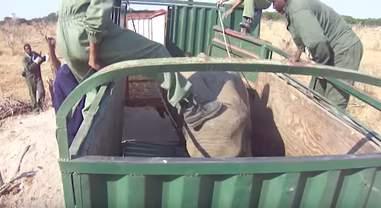 Man kicking elephant in trailer