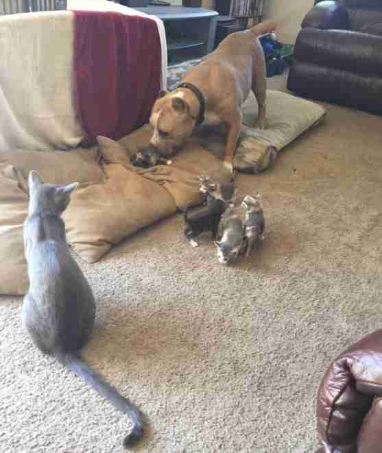 How To Introduce A Dog To A Kitten The Dodo