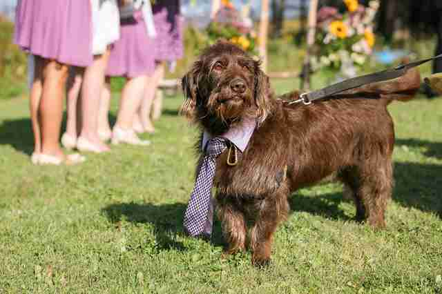 Dog as ring bearer at wedding