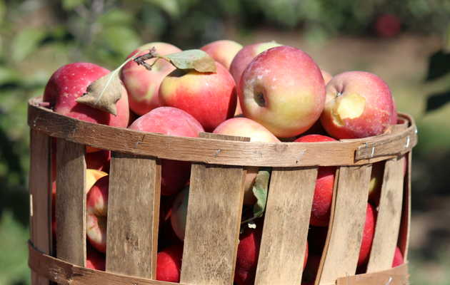 Where to Go Apple Picking in New Jersey This Fall