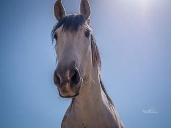 Rescued stallion