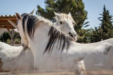 Rescued horses fall in love