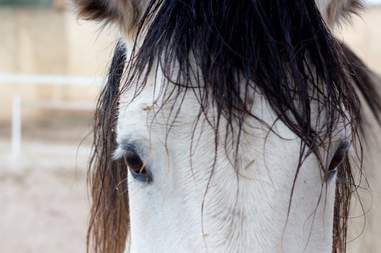 Stallion saved from neglect
